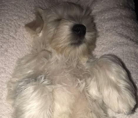 Bijela spava