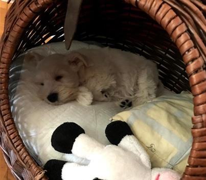 bijela spava kao štene
